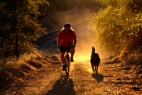 Mountain Biking, Rural Auburn, California Man mountain biking with his dog, rural Auburn, California