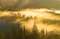 DT-CA-2121 A blanket of fog hovers over the North Fork of the American River, Auburn, California.